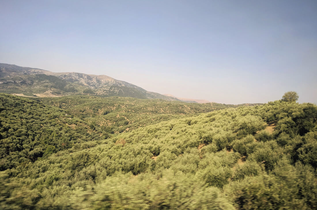 маршрут к  плато Лассити проходит среди бескрайних оливковых плантаций