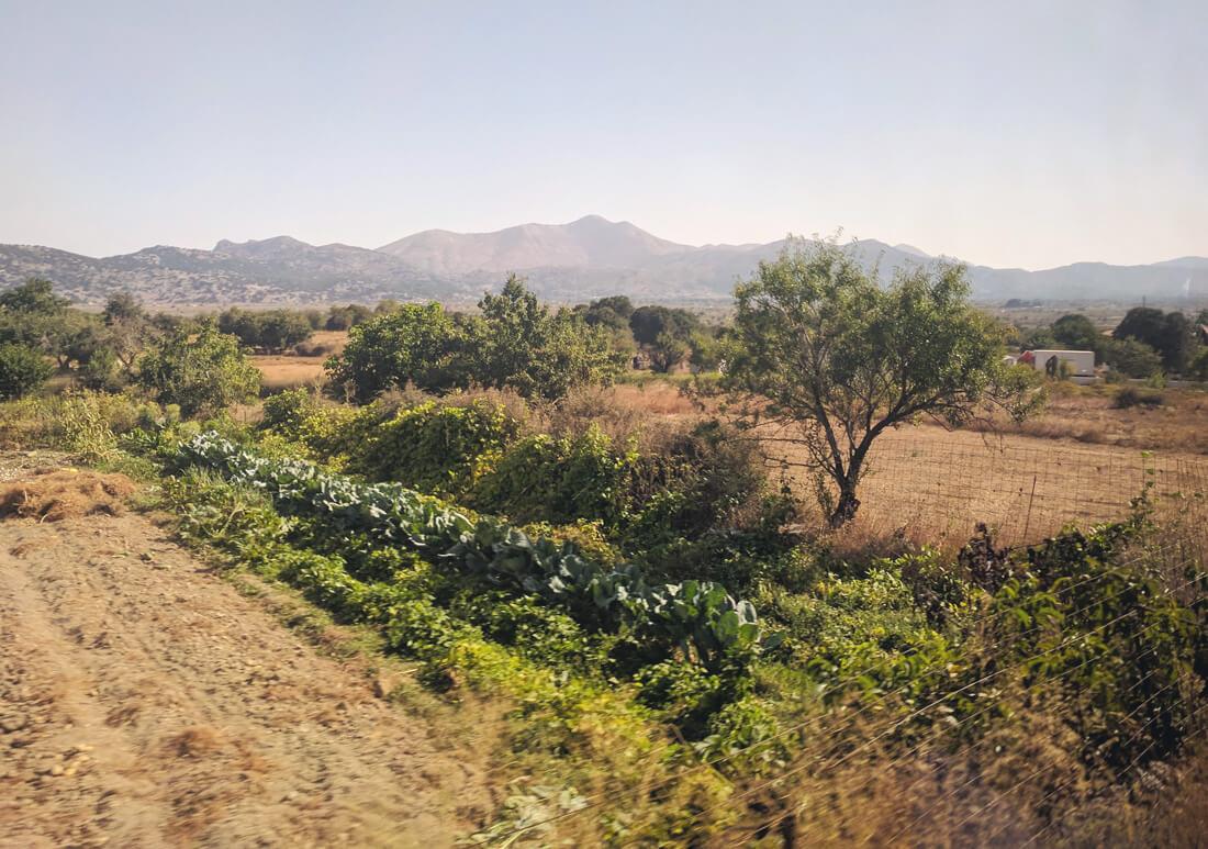 высота плато Лассити и положение относительно окружающих его горных хребтов способствует выращиванию разнообразных овощных культур