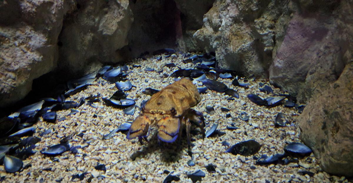 обитатель критского аквариума