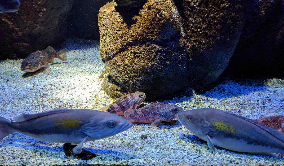 в аквариуме на Крите есть, что посмотреть