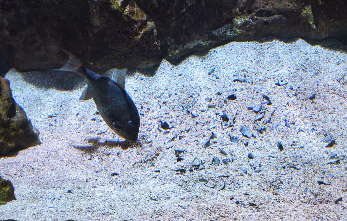 подводный рельеф критского аквариума повторяет рельеф дна Критского моря