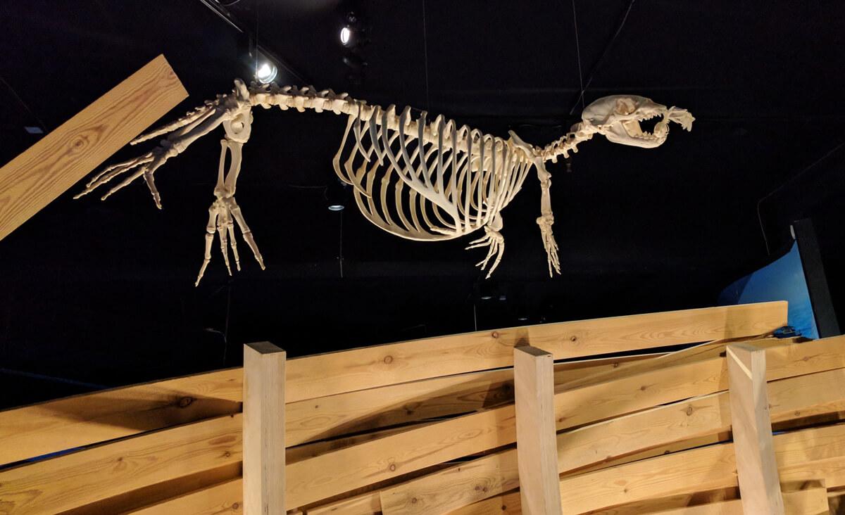 скелет динозавра в критском аквариуме
