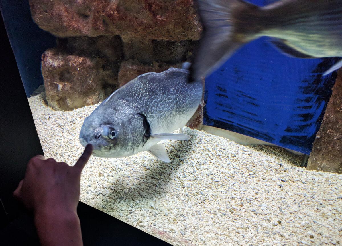 экскурсию в аквариум Крита можно не брать, удобно туда добраться своим ходом