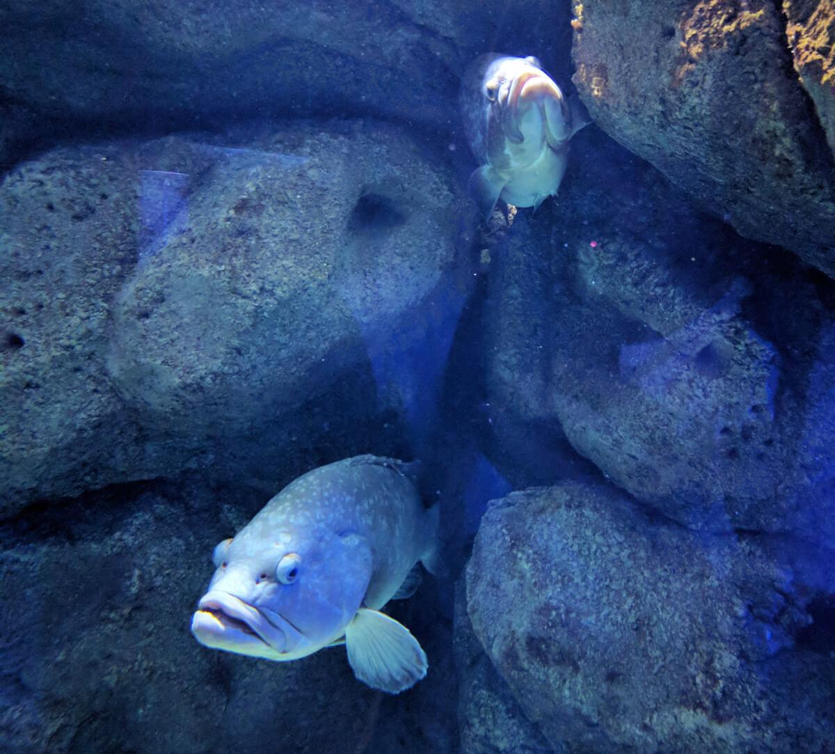 аквариум Крита находится недалеко от Ираклиона, в деревне Коккини Хани
