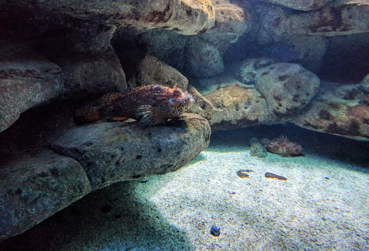 аквариум Крита впечатляет размерами и разнообразием подводных обитателей