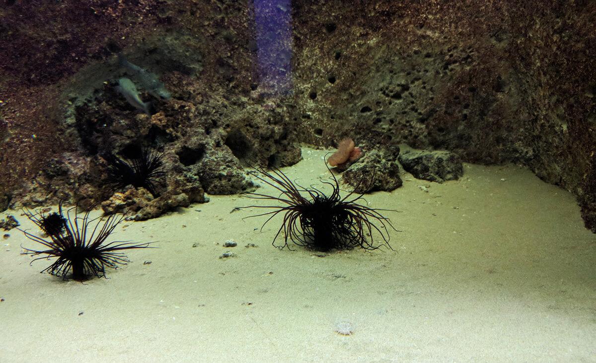 иногда без информационного стенда трудно догадаться что же за обитатель Средиземного моря живет в критском аквариуме